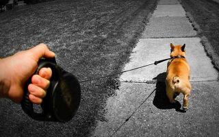 Рейтинг лучших рулеток для собак (ТОП-7) 2021